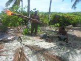 Asando un cerdo para comer en el atoln de Kiritimati